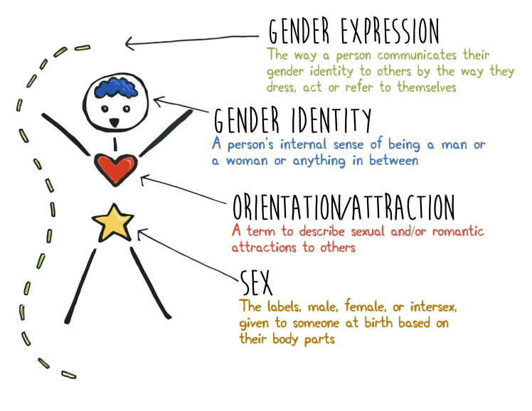 HHB Gender Orientation Sex